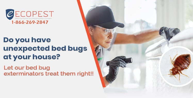 Can Pest Control get rid of ants?