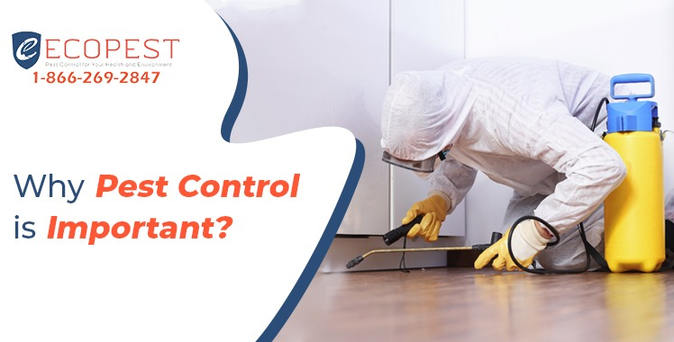 pest control for homes and Commercials