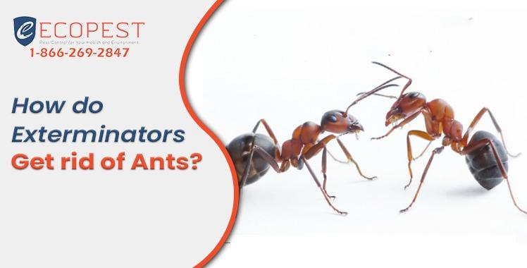 Exterminator for ants
