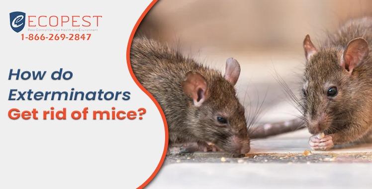 Mice Exterminators
