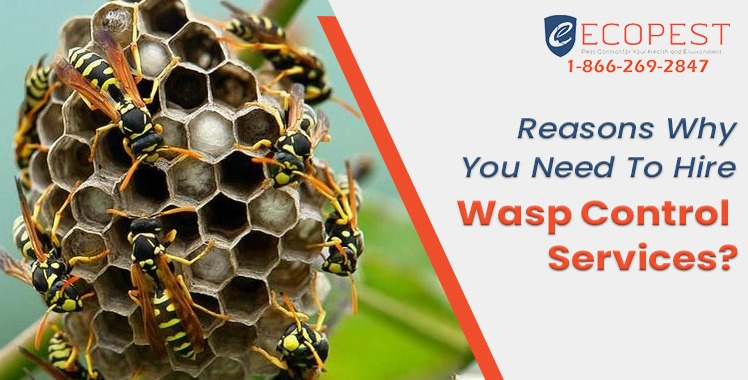 Reasons Why You Need To Hire Wasp Control Services