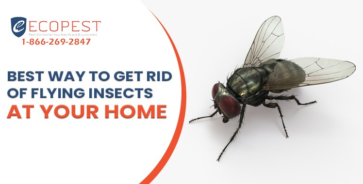 Best Way To Get Rid Of Flying Insects At Your Home.