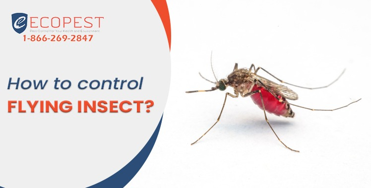 How to control flying insect