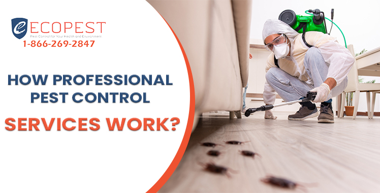 https://ecopest.ca/wp-content/uploads/2021/08/How-Professional-Pest-Control-Services-Work