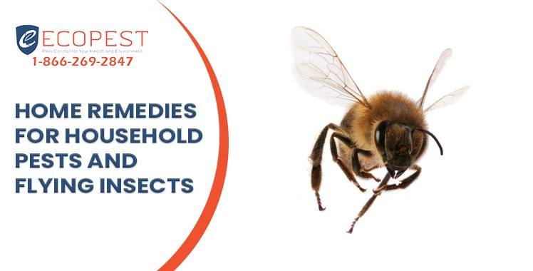 Home remedies for household pests and flying insects