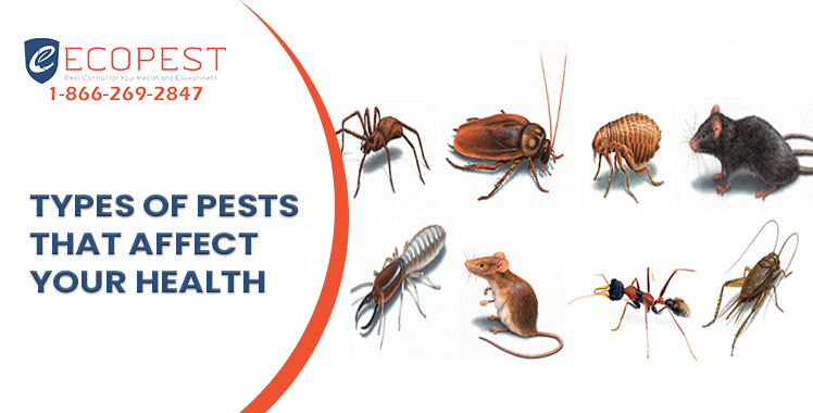 pest control services in calgary and saskatoon